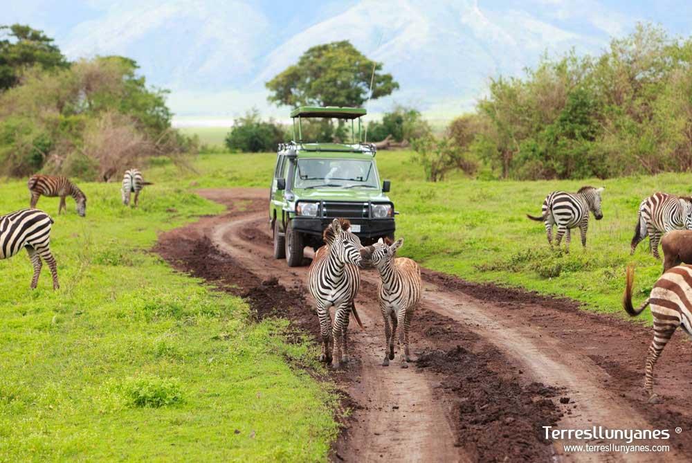 Día de Safari.