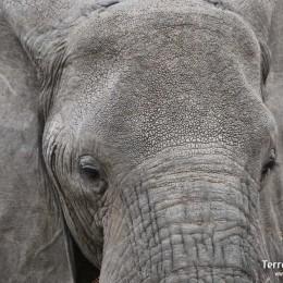 Elefante en Amboseli National Park