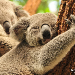 Viajes_Australia_10